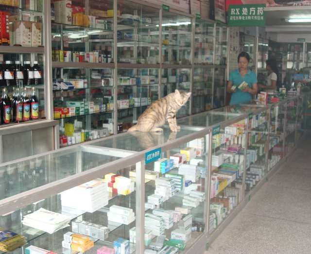 Un gatto seduto in una farmacia cinese di medicina tradizionale