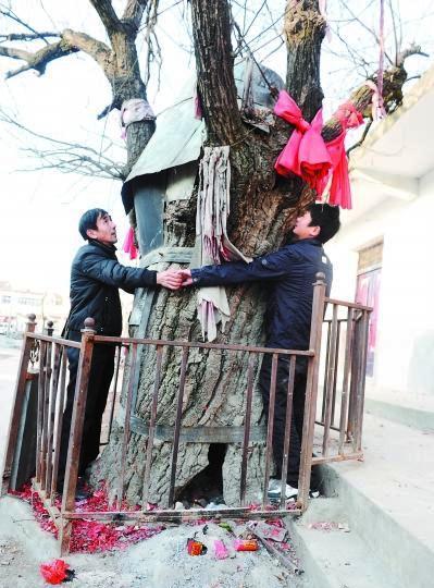 Hefeii (Anhui) - inchiesta sul patrimonio forestale