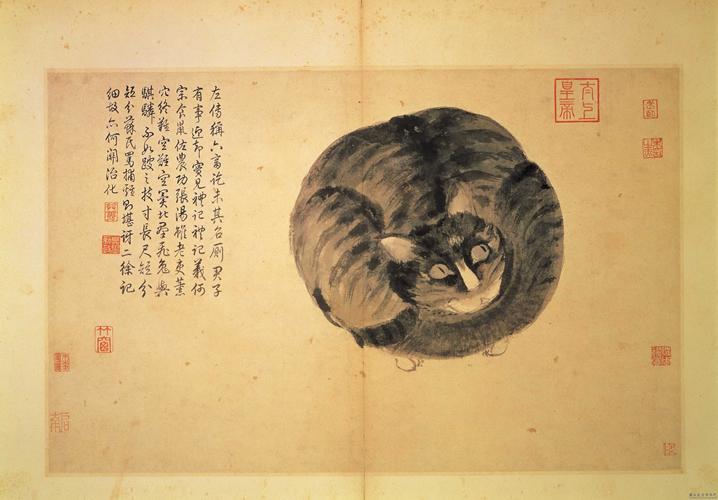 Felini in Cina