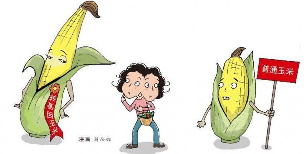 Cina e mais transgenico